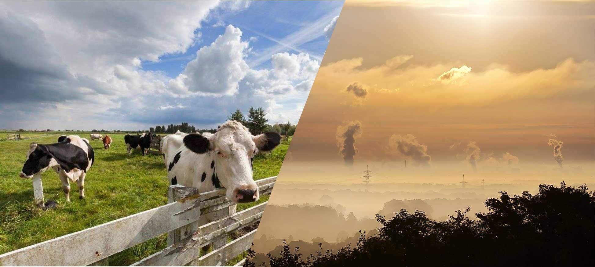 Algemeen Belang wil lokale gevolgen weten van het landelijke stikstofbeleid!